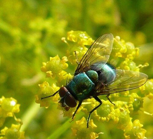 Гламурный мухх