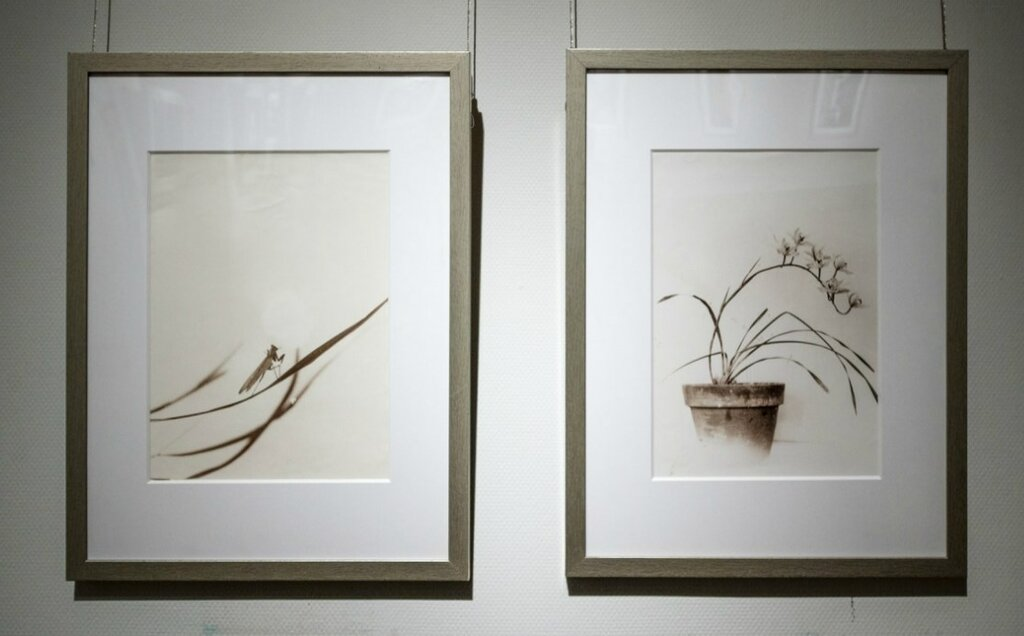 Лан Цзиншань. Орхидеи
