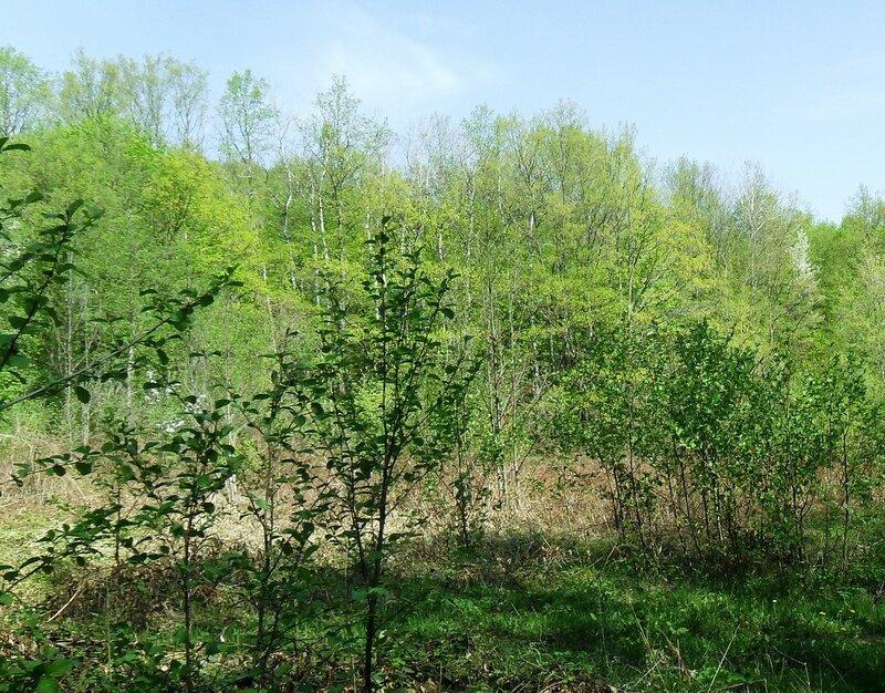 Лес, апрель... SAM_7695 - 2.JPG