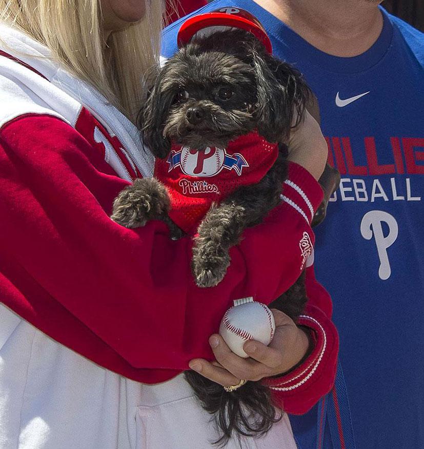 собаки на бейсбольных стадионах / Ballpark Dogs