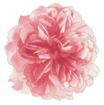 handpainted_flowers_layered_psd_2.png