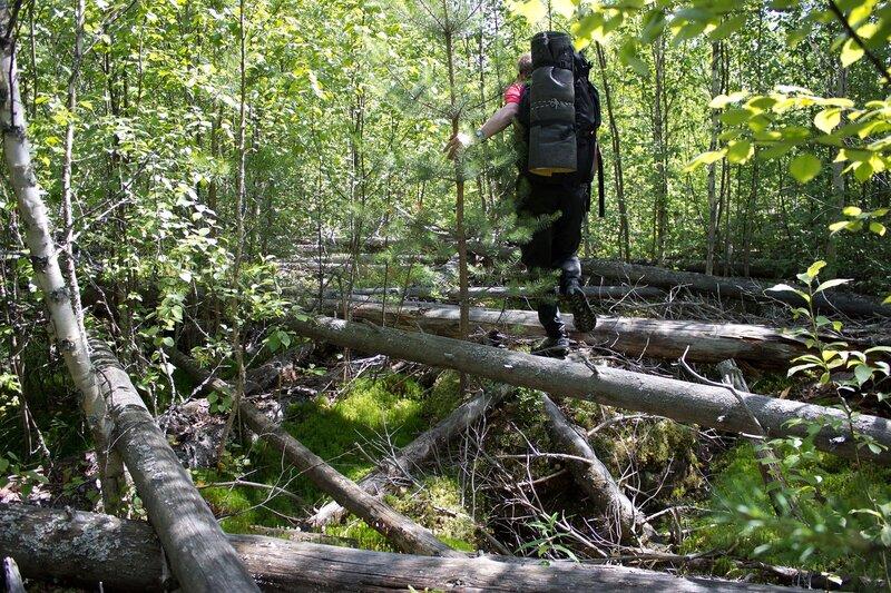 бурелом в лесу у мшинского болота
