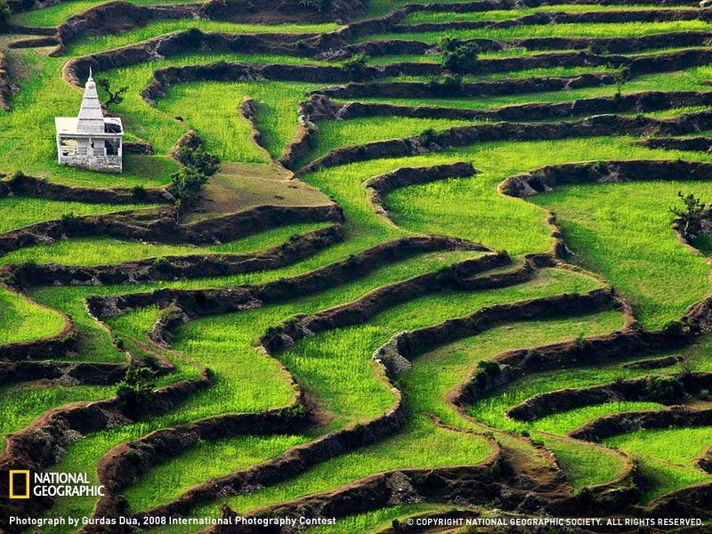 Террасы в Индии