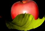 MRD_LOTD_apple-leaf.png