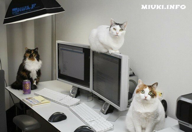 Японская фирма разрешила сотрудникам приносить на работу своих кошек