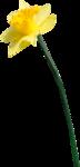 RR_SpringFling_Element (86).png