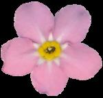 RR_SpringFling_Element (97).png