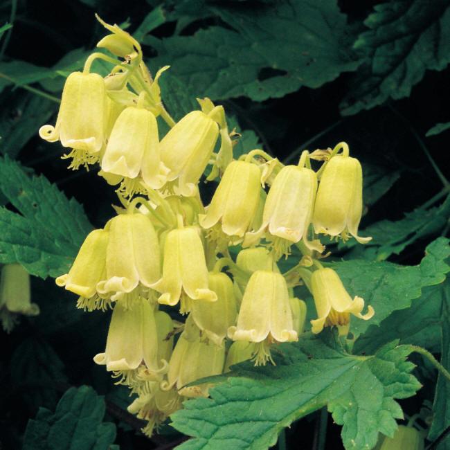гарні жовті квіти