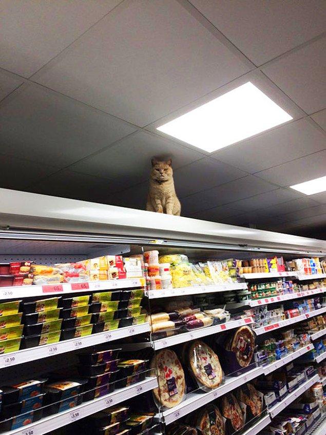 Этот джентльмен определенно король этого и всех супермаркетов в округе.