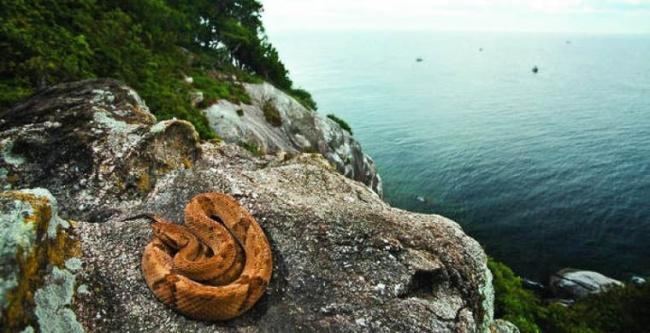 Остров Кеймада-Гранди в35км отберегов Бразилии только свиду похож нарайское место. Поездка вэт