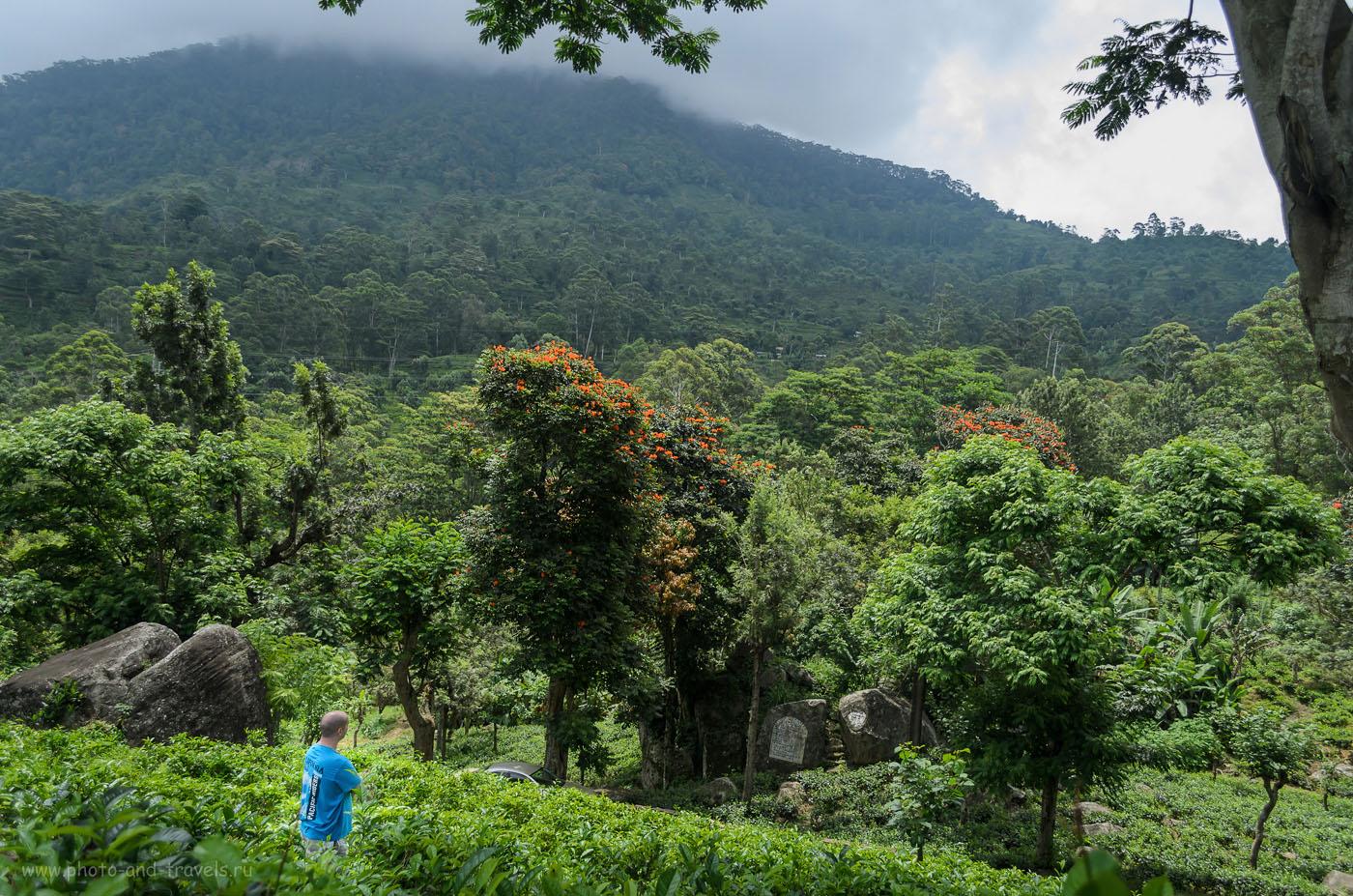 Фото 7. Такими замечательными видами мы любовались на участке дороги Kalupahana – Agarapatana – Norwood – Maskeliya – Nallatanniya во время нашего самостоятельного путешествия по Шри-Ланке за рулем арендованной машины