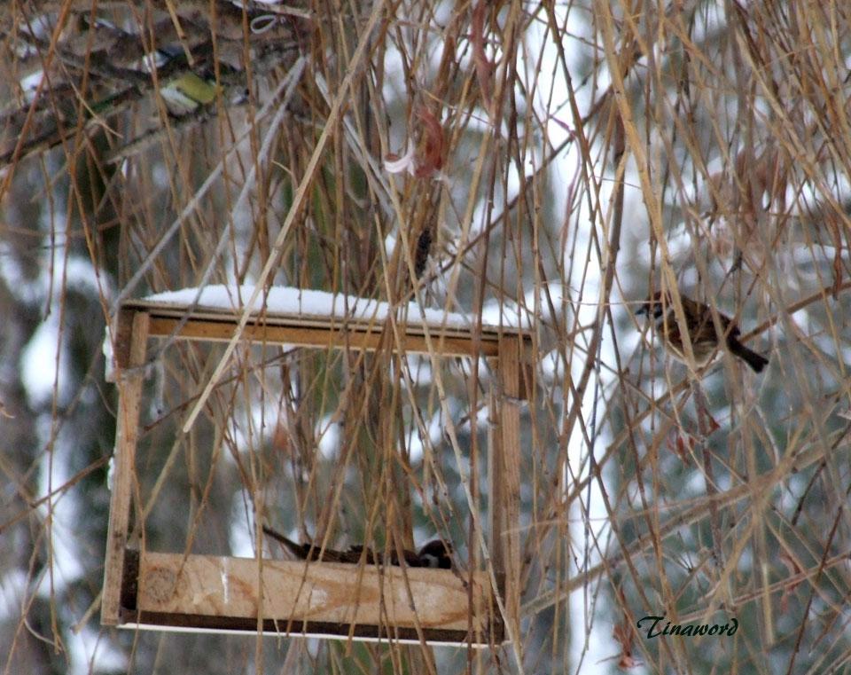 птицы-32.jpg
