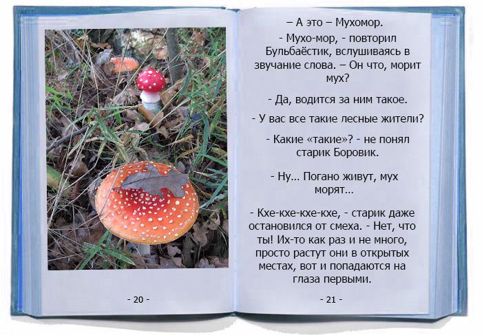 Новые знакомства Бульбаёстика. Грибные истории.