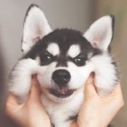 Улыбчивая собака
