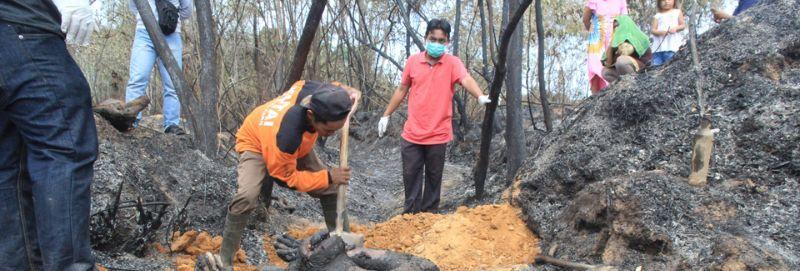Похороны семейства орангутанов, погибшего в лесном пожаре