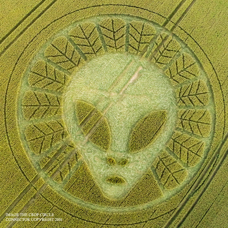 Gray Alien head Crop circle UK year 2016