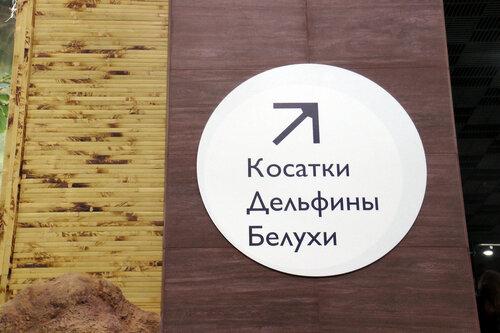 moskvarium-8.jpg