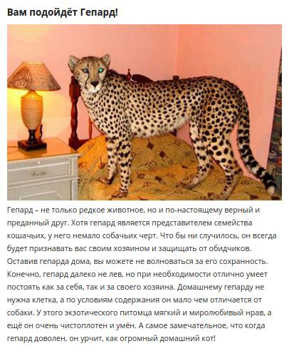 необычное домашнее животное.jpg