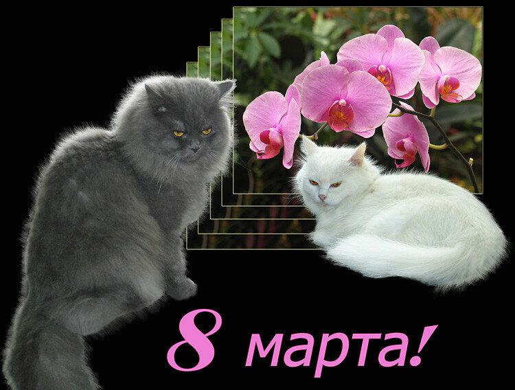 Поздравления с 8 марта с котятами