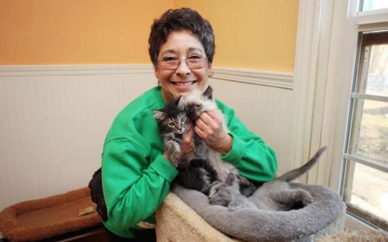 Эта женщина ежегодно тратит 1,6 млн долларов на содержание тысячи своих котов