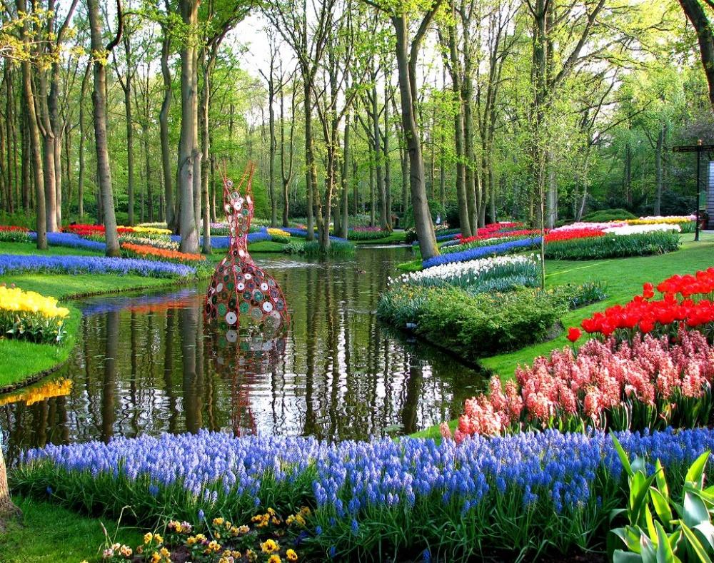 Ежегодно садоводы Кёкенхофа высаживают более 7миллионов луковиц фрезий, гиацинтов, лилий, орхидей,