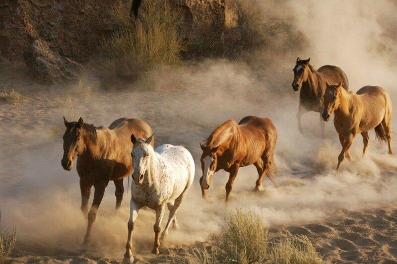 Факты: История приручения лошади с красивыми фотографиями