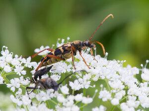 s:жуки,c:с темными полосами