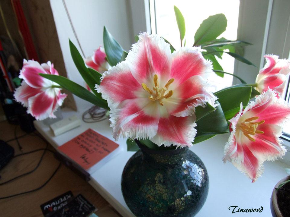 тюльпаны-6.jpg