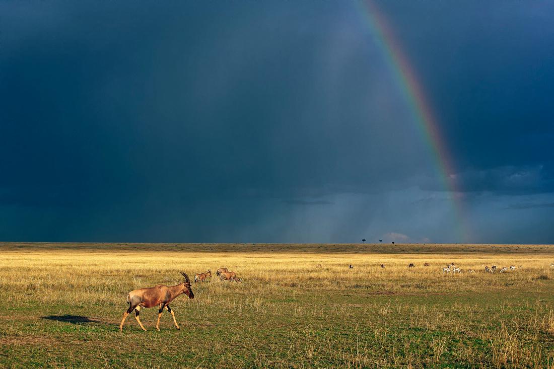 Восхитительные фотографии Африки
