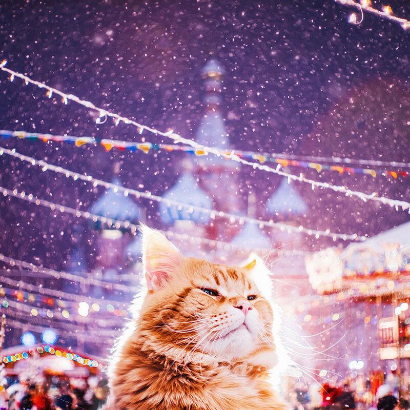 кот Кристины Макеевой