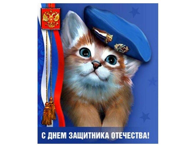 картинки кошки с днем защитника отечества купить права что