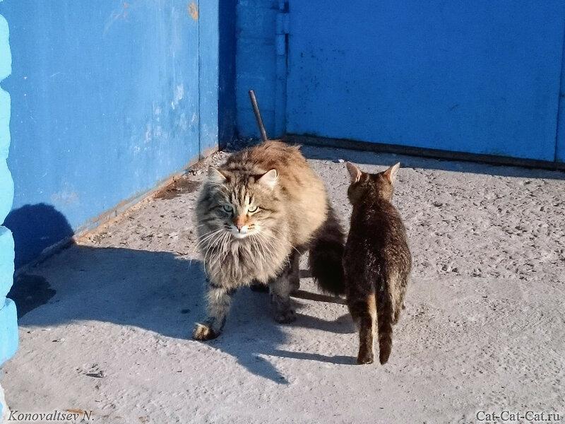 Кошки у дома