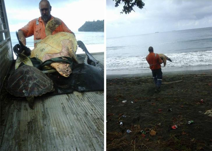 Эти мужчины покупают морских черепах, чтобы… выпустить их обратно в море (6 фото)