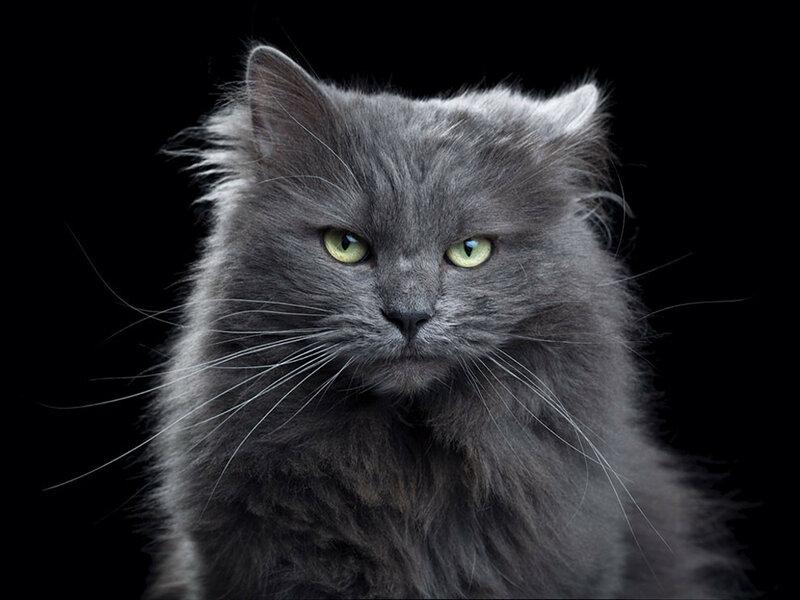 Примечательные портреты котов, подчеркивающие их личность