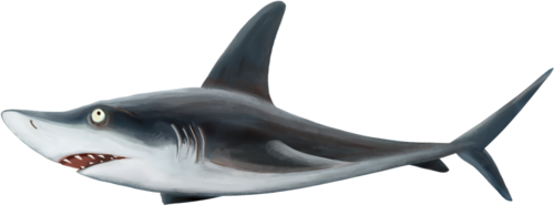 emeto_TheScaryPirates_shark.png