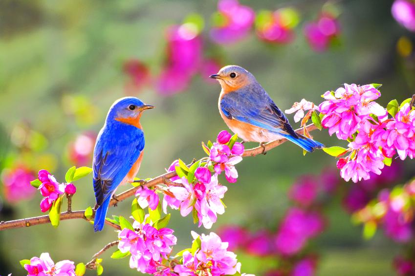 весна,чудо,сердце,душа,пора,солнышко,формальность,оптимист