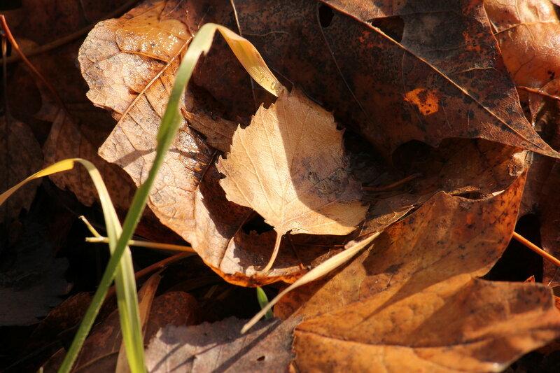 Осенние листья на участке Себеж - Кузнецовка