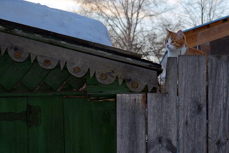коты Сокольского 2