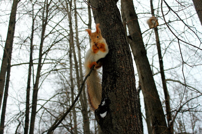Neskuchny Garden: the squirrel kingdom