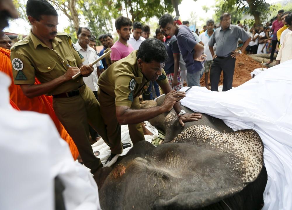 Похороны слона на острове Шри-Ланка