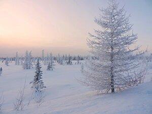 Неяркая красота Ямала