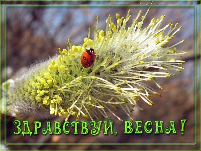 Звуковые картинки поздравляем с весной