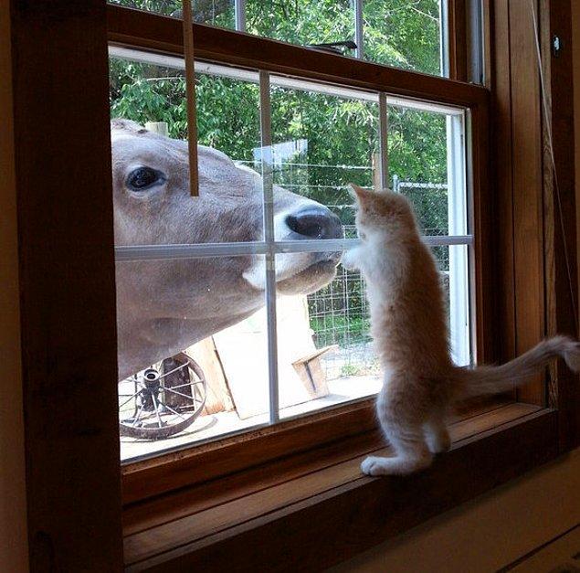 Любопытная Варвара хочет потрогать своего большого друга.