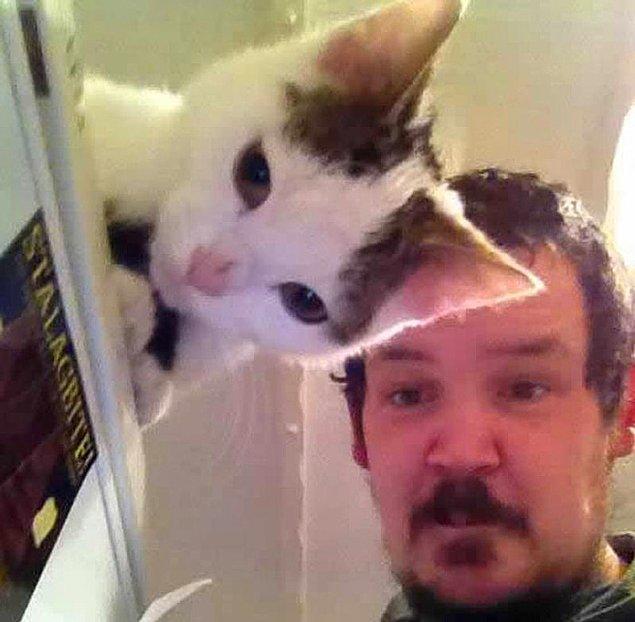Прозрачный кот