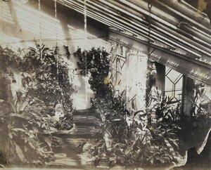 Зимний сад при доме Левашовых на Фонтанке