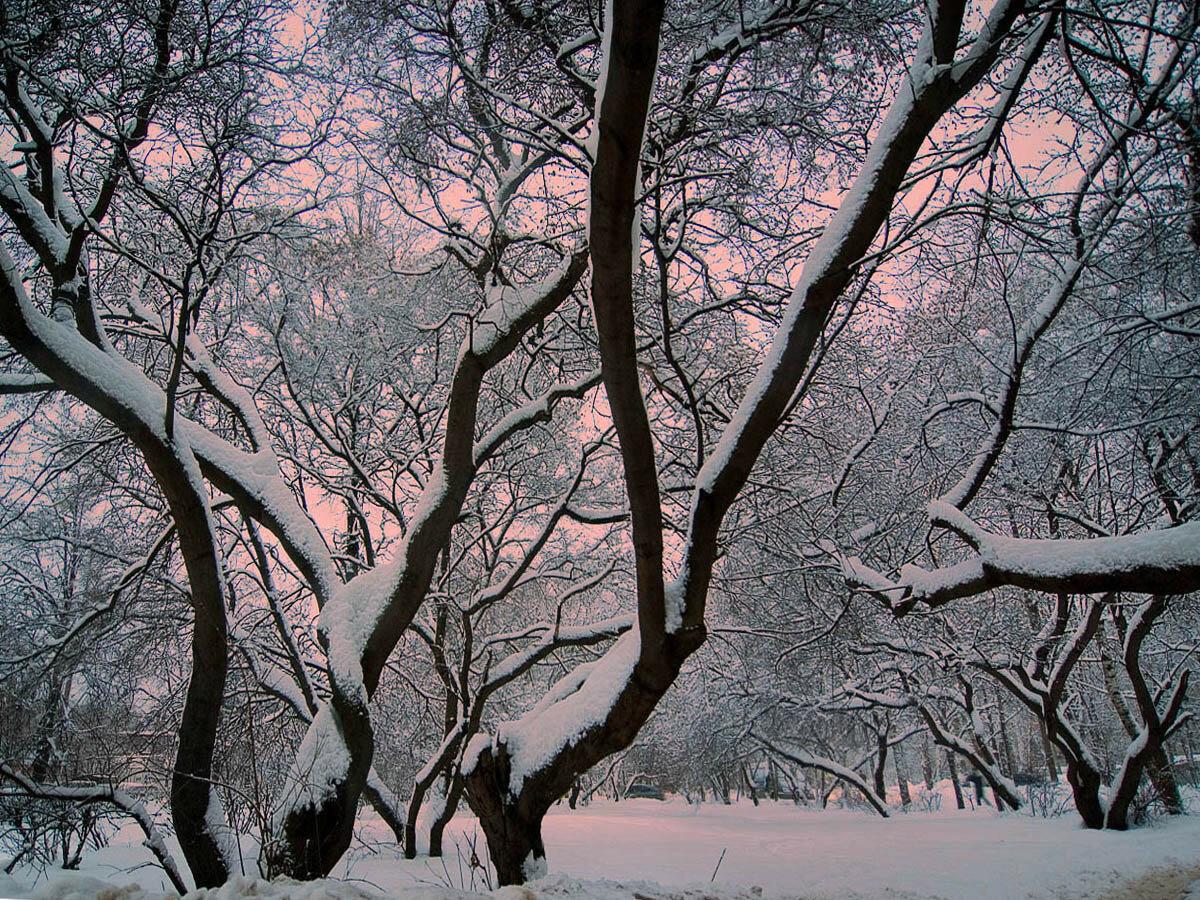 Зимний вечер. Автор фото: Юрий Семенов