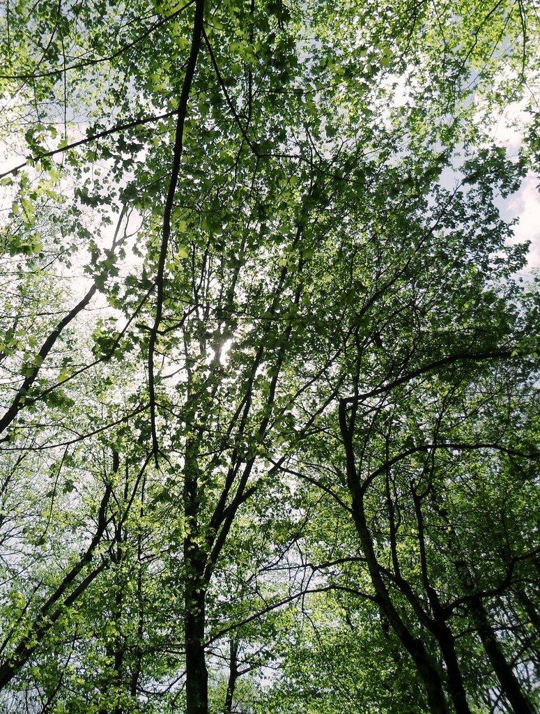 Ветви над головой ... SAM_7713.JPG