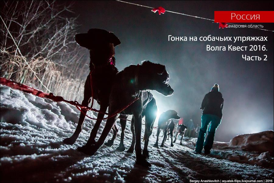 Гонка на собачьих упряжках Волга Квест 2016. Часть 2.