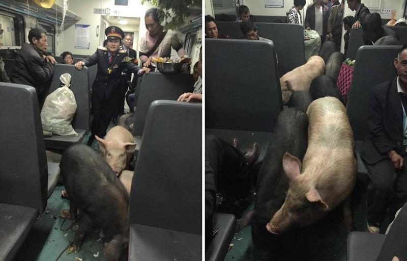 Необычные пассажиры китайского поезда