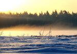 Зимний туман в Подушкинском лесу